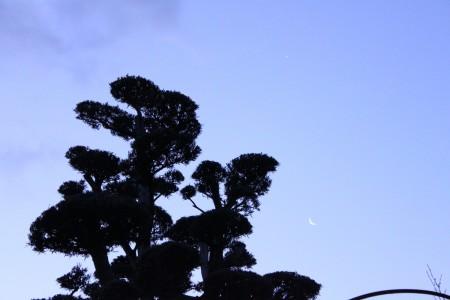 日の出前の空。結構明るいけど下弦の月がみえててなかなか幻想的。