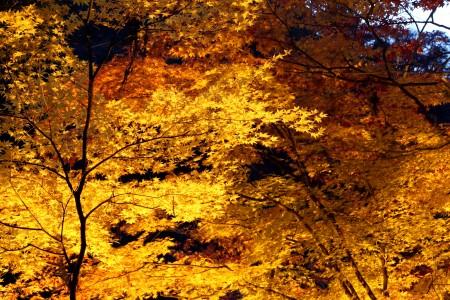 香嵐渓の夜景。