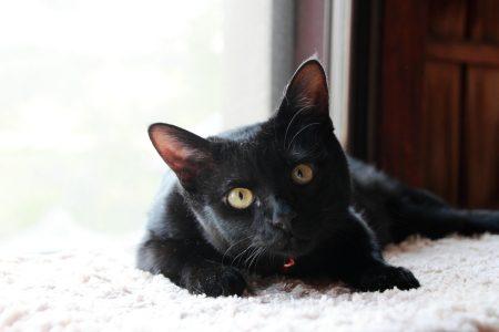 こっちは家ネコのしーすけ。(♀)